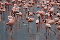lake-nakuru-flamingos