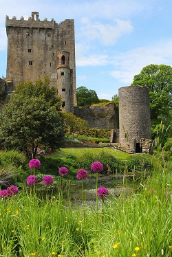 Ireland blarney castle flowers